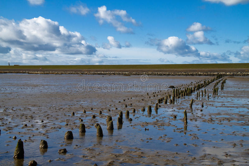 Wooden poles on a mudflat. Or tidal flat in the Dutch Wadden sea royalty free stock images