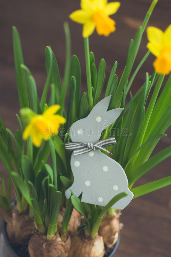 The Wooden Polka dot Hare and the yellow daffodils. Easter postcard concept. royalty free stock photo