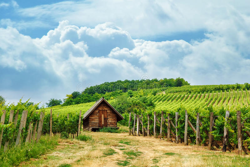 Wooden press house in vineyard royalty free stock photos