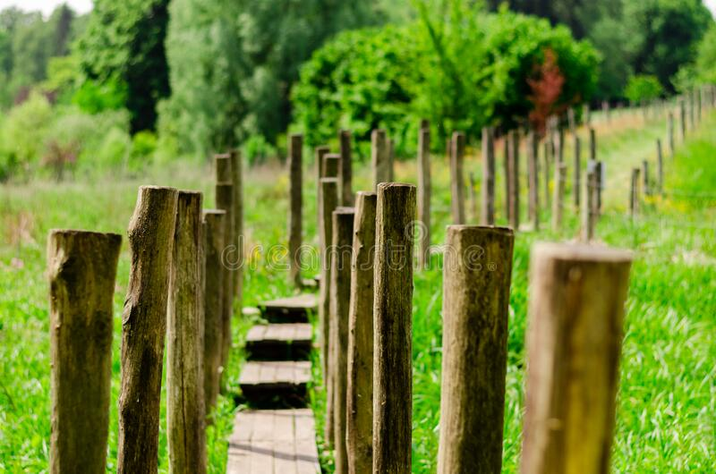 Wooden road in a green environment royalty free stock image