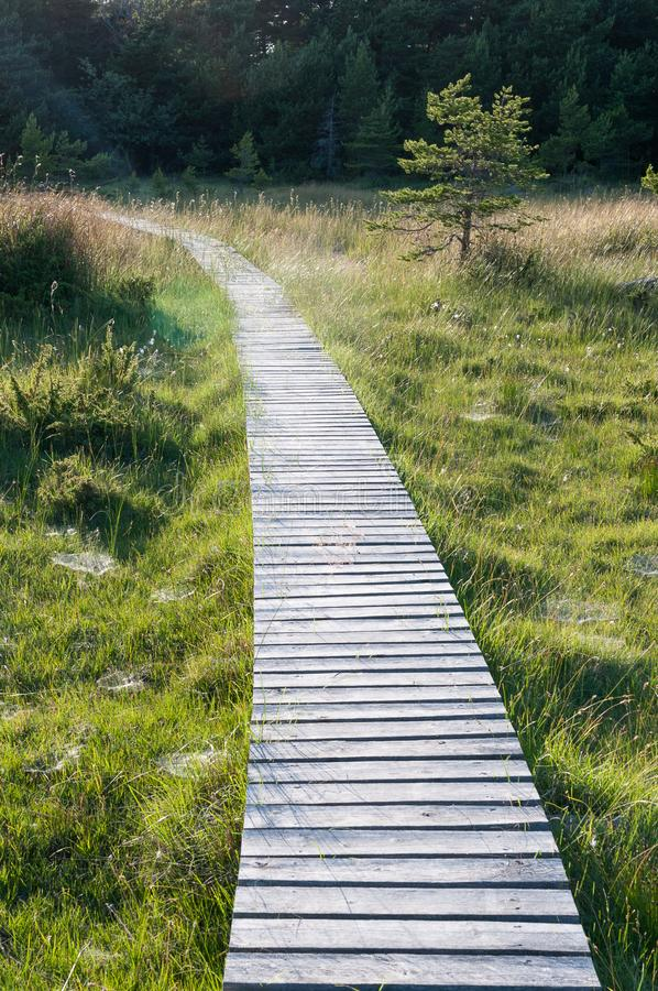 A wooden road through a peat bog, sweden, gotland royalty free stock photo