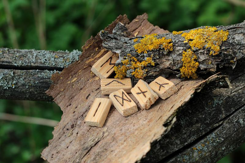 Wooden runic alphabet, which lie on a dry bark from a tree. Near yellow moss. Runic circle, Futhark in natural elements. Runic futark. The concept of the ancient royalty free stock image