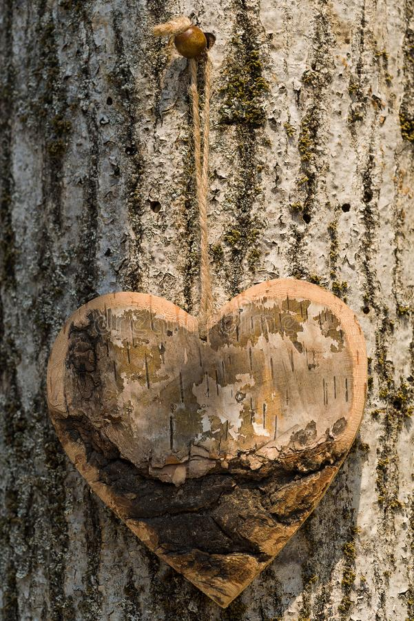 Wooden and rustic shape heart wooden hang up, on the bark of the. Wooden and rustic shape in wood hang up, on the tree stock photo