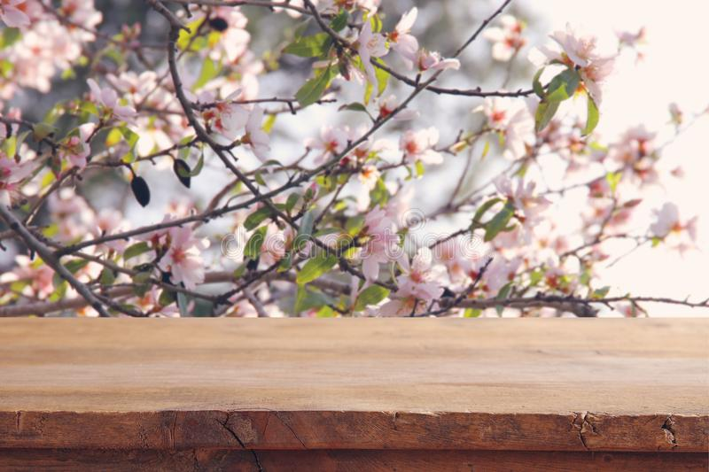 Wooden rustic table in front of spring cherry blossoms tree. product display and picnic concept. Wooden rustic table in front of spring cherry blossoms tree royalty free stock images