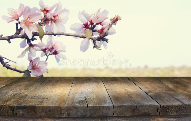 Wooden rustic table in front of spring cherry blossoms tree. product display and picnic concept. Wooden rustic table in front of spring cherry blossoms tree royalty free stock image