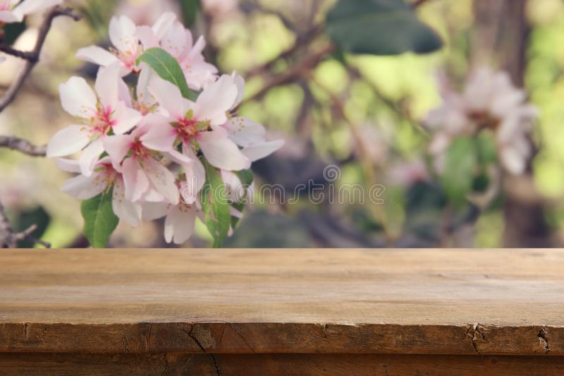 Wooden rustic table in front of spring cherry blossoms tree. product display and picnic concept. Wooden rustic table in front of spring cherry blossoms tree stock image