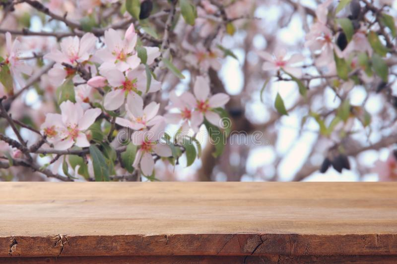 Wooden rustic table in front of spring cherry blossoms tree. product display and picnic concept. Wooden rustic table in front of spring cherry blossoms tree stock photos