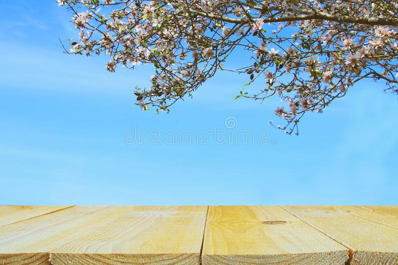 Wooden rustic table in front of spring cherry blossoms tree. product display and picnic concept. Wooden rustic table in front of spring cherry blossoms tree stock photography