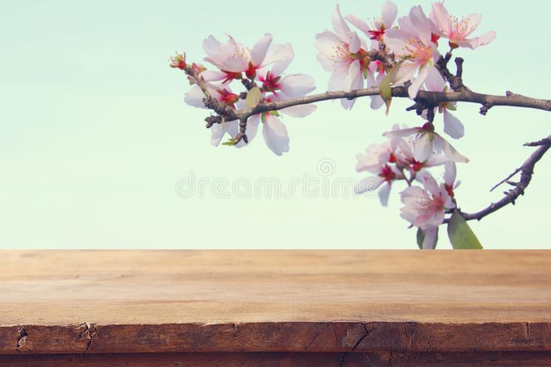 Wooden rustic table in front of spring cherry blossoms tree. product display and picnic concept. Wooden rustic table in front of spring cherry blossoms tree royalty free stock photos