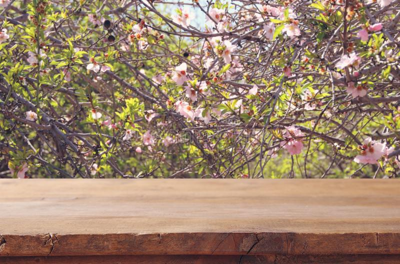 Wooden rustic table in front of spring cherry blossoms tree. product display and picnic concept. Wooden rustic table in front of spring cherry blossoms tree royalty free stock photo