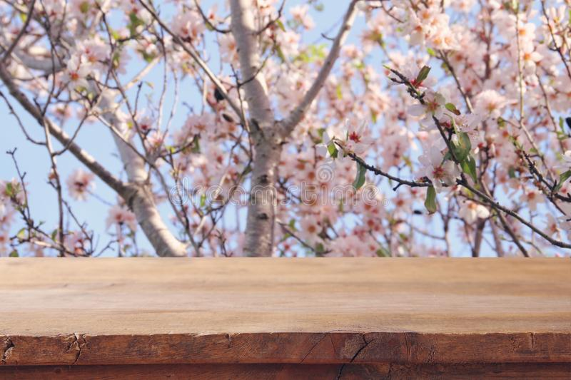 Wooden rustic table in front of spring cherry blossoms tree. product display and picnic concept. Wooden rustic table in front of spring cherry blossoms tree stock photo