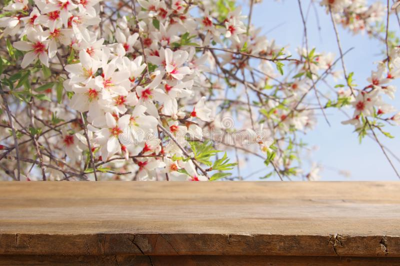 Wooden rustic table in front of spring cherry blossoms tree. product display and picnic concept. Wooden rustic table in front of spring cherry blossoms tree royalty free stock photography