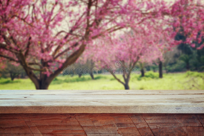 Wooden rustic table in front of Spring Cherry blossoms tree. retro filtered image. product display and picnic concept.  royalty free stock image
