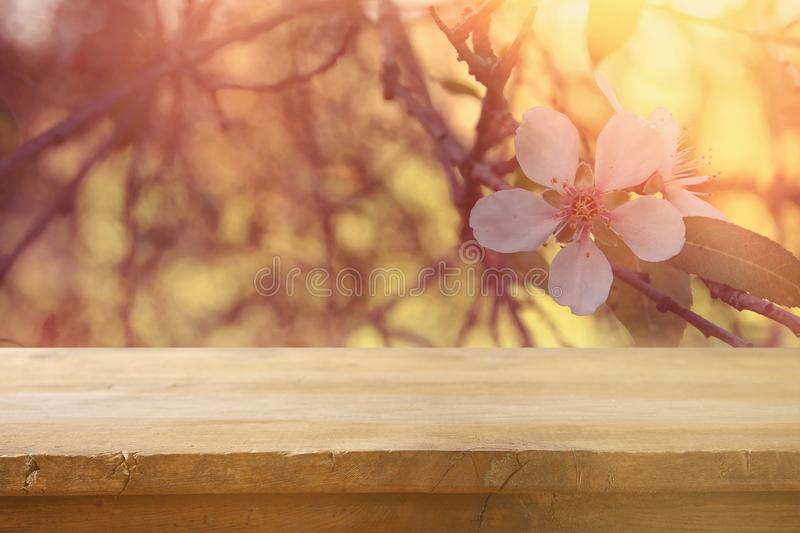 Wooden rustic table in front of spring cherry blossoms tree. vintage filtered image. product display and picnic concept. Wooden rustic table in front of spring stock photo