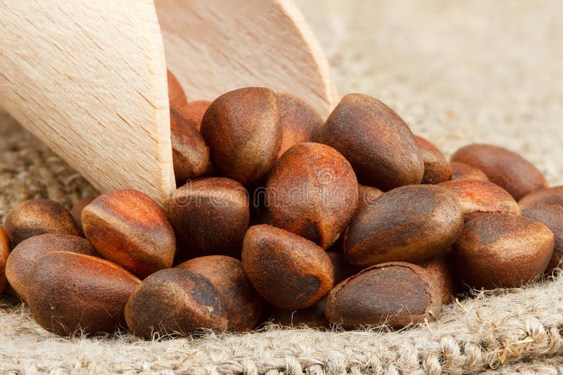 Wooden scoop with pine nuts royalty free stock photo