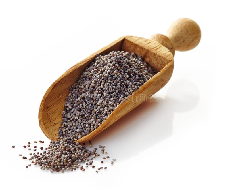 Wooden scoop with poppy seeds stock photography