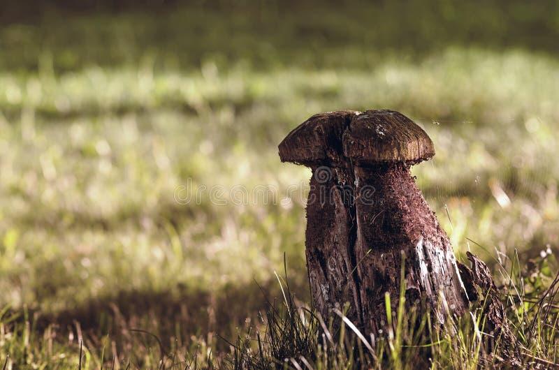 Wooden sculpture of mushroom stock photography