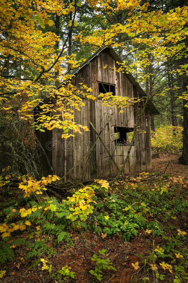 Wooden shack with fall foliage. Old wooden shack amid trees with fall foliage on sunny day in woods royalty free stock photo