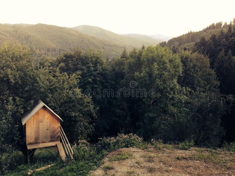 Wooden Shack In Woods Free Public Domain Cc0 Image