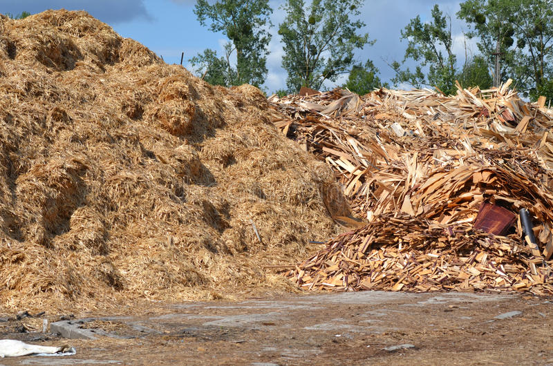 Wooden shavings. Pile of wooden shavings on the ground royalty free stock images