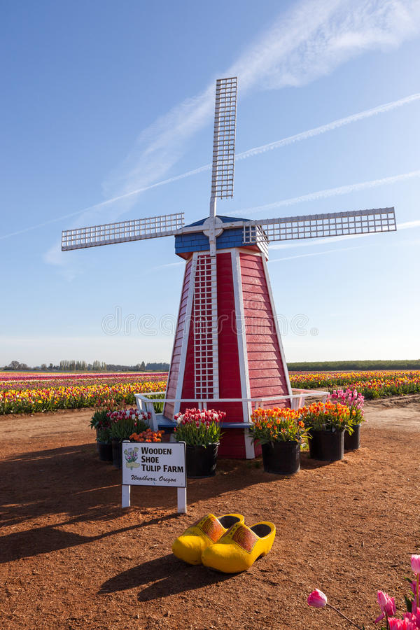 The Wooden Shoe Tulip Farm. WOODBURN, OREGON - April 10 2014: A wooden windmill and shoes decorate the Wooden Shoe Tulip Farm where rows of tulips are in full royalty free stock photography