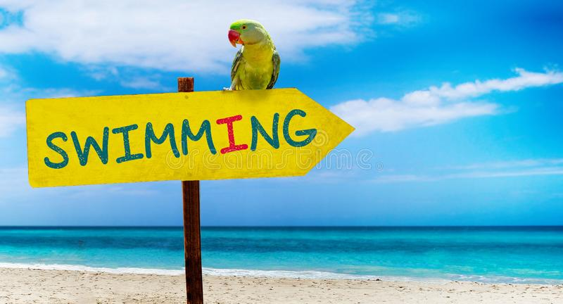 Wooden sign on beautiful beach and clear sea wit text swimming. A green parrot sits on a pointer to a tropical paradise. There is summer time, ocean, water royalty free stock photo