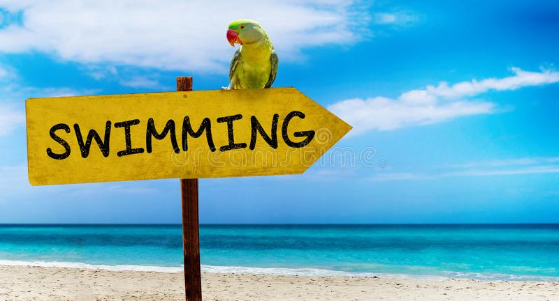Wooden sign on beautiful beach and clear sea wit text swimming A green parrot sits on a pointer to a tropical paradise. There is summer time, ocean, water royalty free stock photo