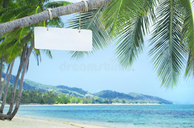 Wooden signboard. On a palm tree at the beach bar royalty free stock photos
