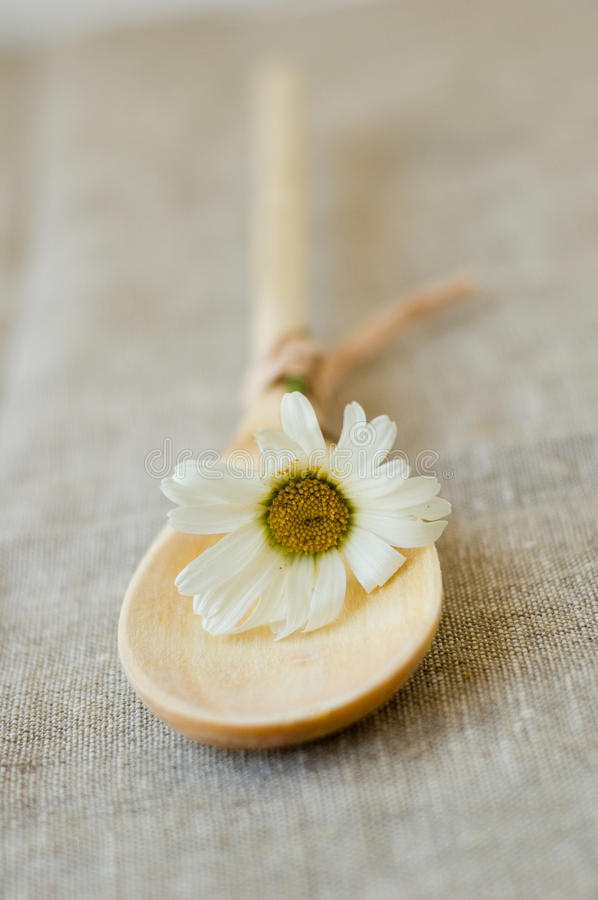 Wooden spoon. And daisy flowers stock photos