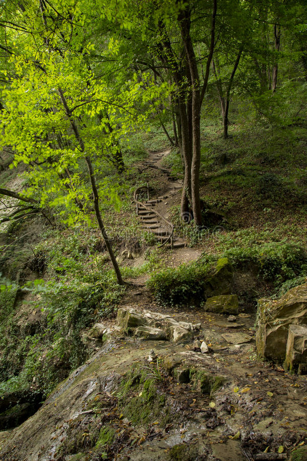 Wooden stairs immersed in greenery royalty free stock photo