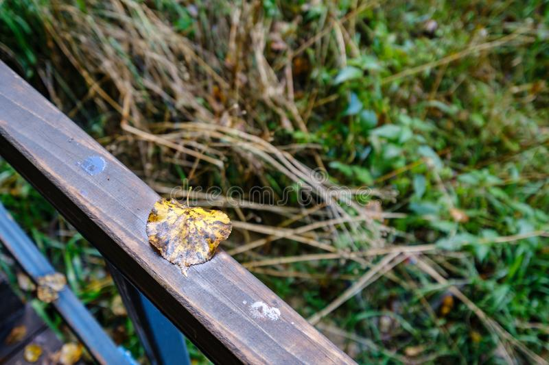 wooden stairs to watch tower in wet colored autumn day in countryside stock photos
