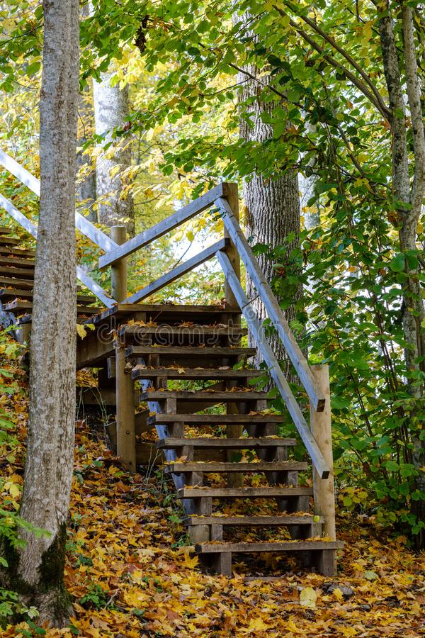 wooden stairs to watch tower in wet colored autumn day in countryside royalty free stock photos