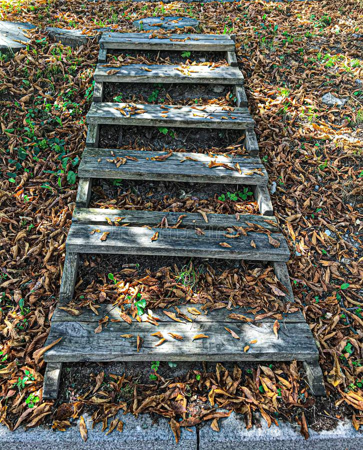 Wooden steps in golden autumn forest, tourist footpath royalty free stock images