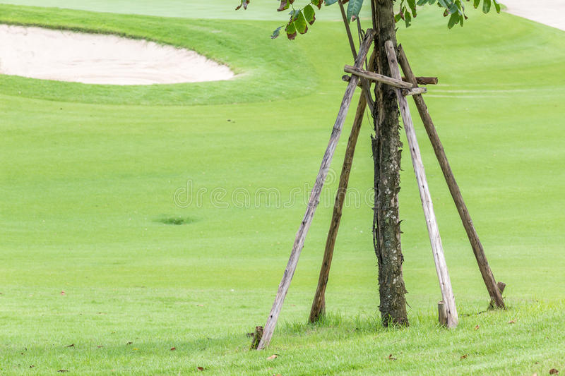 Wooden sticks for supporting the new tree planting in green grass golf course. stock image