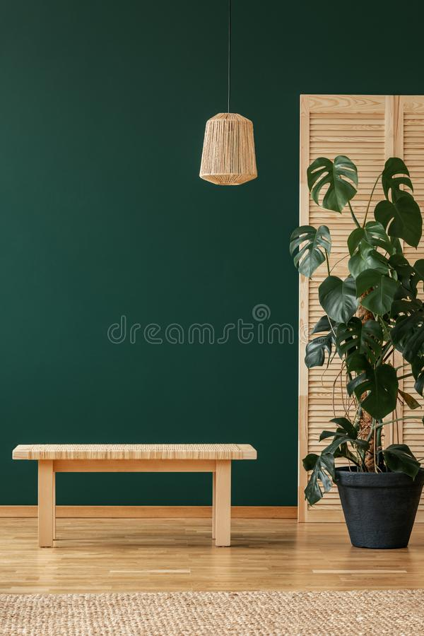 Wooden stool next to plant in natural living room interior with lamp and rug. Real photo. Wooden stool next to plant in green natural living room interior with royalty free stock images