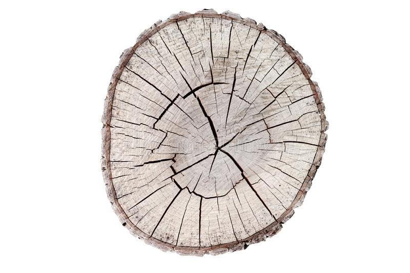 Wooden stump isolated on the white background. Round cut down tree with annual rings as a wood texture. royalty free stock photography