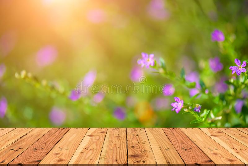 Wooden table on and blur nature green tree and purple flower. During sunset light background for spring or summer concept royalty free stock image