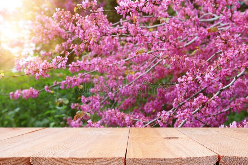 Wooden table in front of spring blossom tree landscape. Product display and presentation.  royalty free stock images