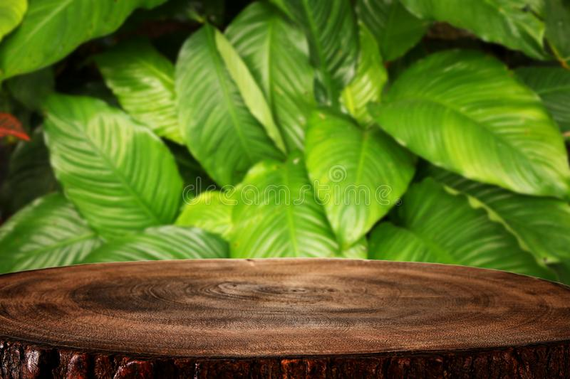 Wooden table in front of tropical green floral background. for product display and presentation.  stock photo