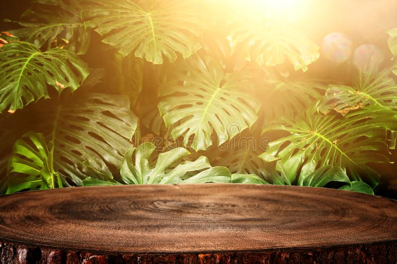 Wooden table in front of tropical green Monstera leaves floral background. for product display and presentation.  stock photo