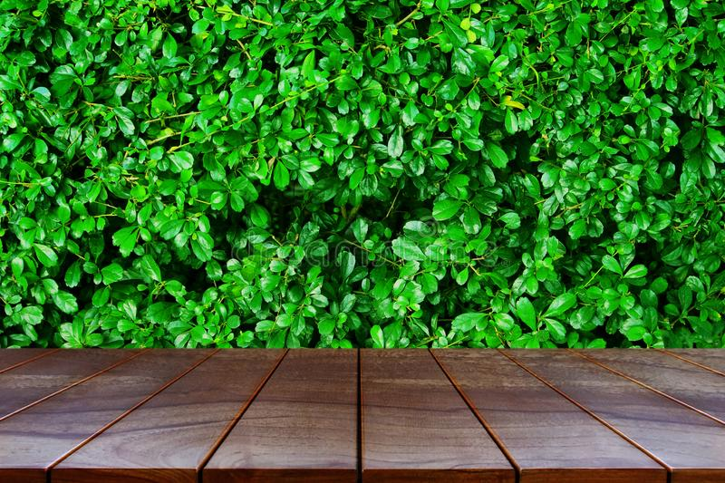 Wooden table on natural background for product display montage.  stock image