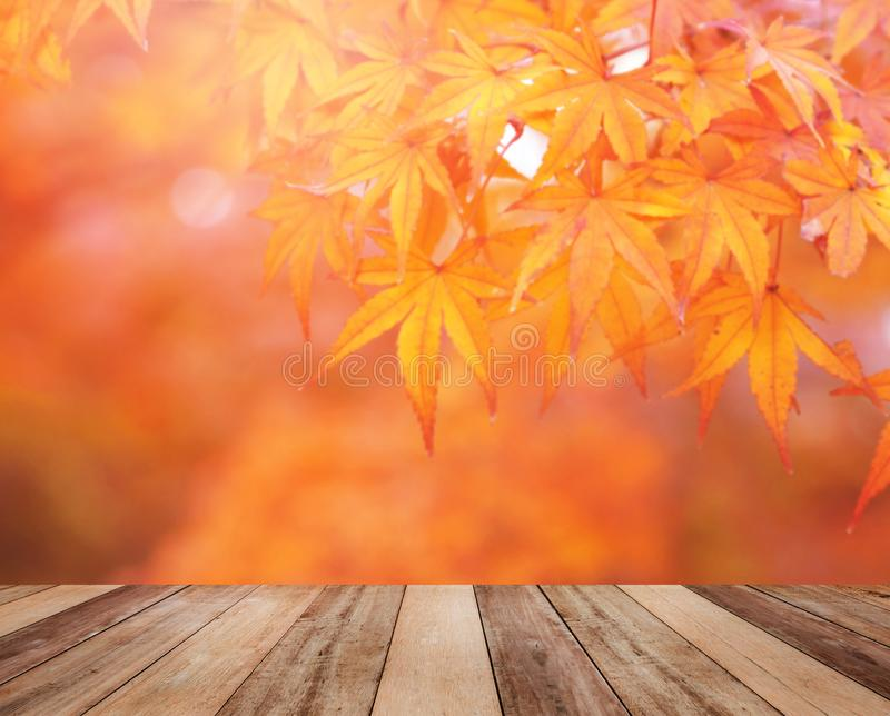 Wooden table top over blurred orange maple leaves in autumn royalty free stock photography