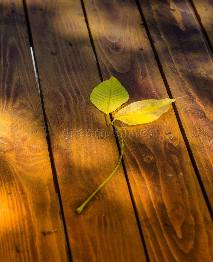 wooden table with walnut leaves stock photo