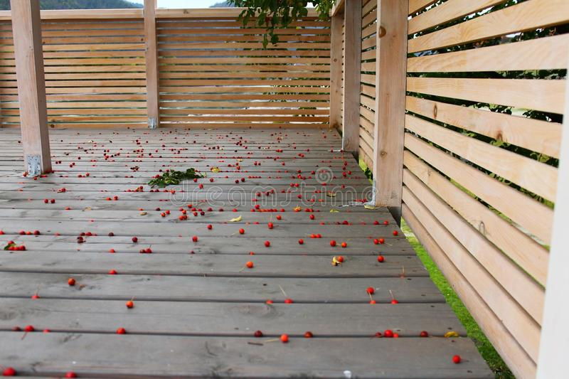 Wooden terrace background with planks and a lot of little wild apples on it stock images