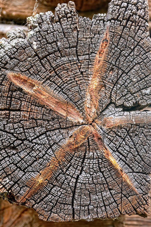 Download Wooden texture stock photo. Image of rough, concentric - 16113876