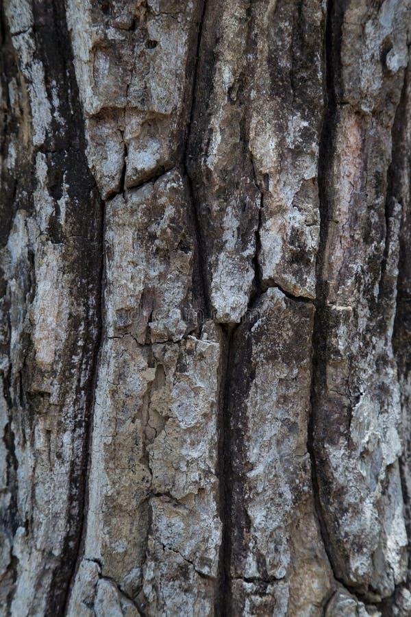 Download Wooden Texture stock image. Image of floor, wood, hardwood - 42683063