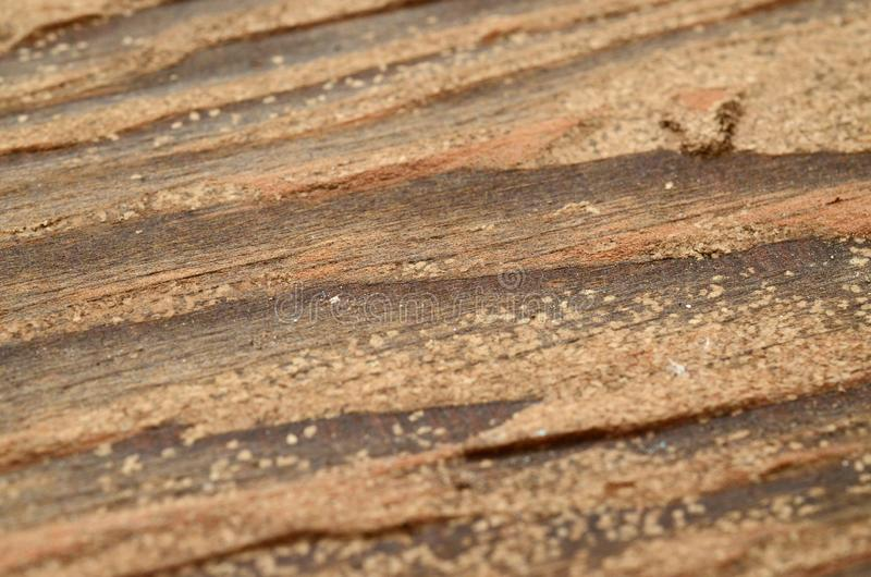 Wooden texture background. Natural wood texture, old wood texture for add text or work design for backdrop product. top view. Wooden texture background. Brown stock image