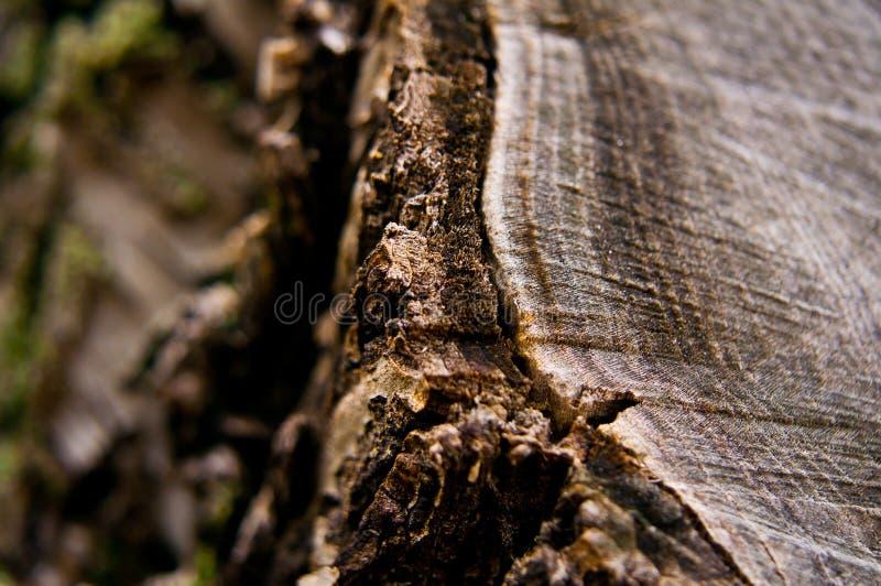 Download Wooden texture stock photo. Image of natural, brown, floor - 39502778