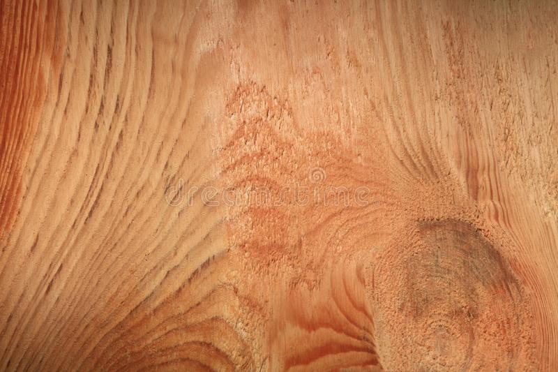 Wooden texture of a freshly cut pine tree close-up royalty free stock images
