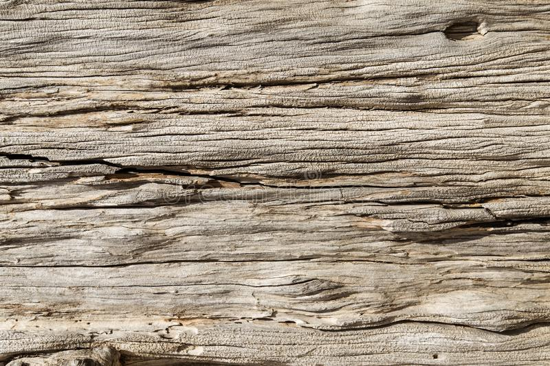 Wooden texture. Grunge olive wood texture as background royalty free stock photos